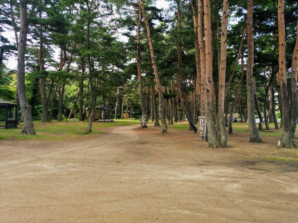 天神浜オートキャンプ場の林間サイト